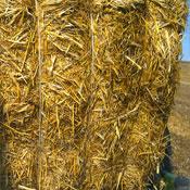 Intercord - Landbouwkoorden